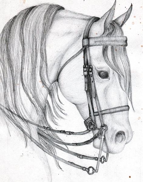 Arab horse head by AllOfThatJazz on DeviantArt