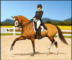 *Save GutCaballo Event - Quentin Dressage Entry*