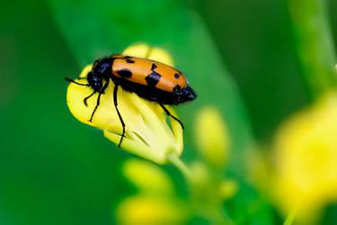 Yellow Bugs by vids
