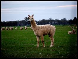 alpaca 3 by nigelleitch
