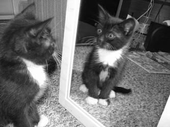 Kitten Curiosity