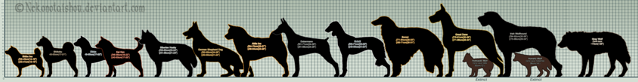 Ginga Breed Size Chart WIP by nekonotaishou