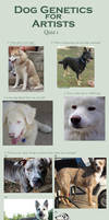 Dog Colors for Artists- QUIZ 1 updated by nekonotaishou