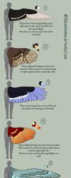 Wing Design 'adoptables' -batch 1 by nekonotaishou