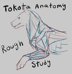 Tokota Anatomy study