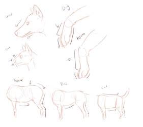 Quick comparative anatomy- wolf, cat, hyena, horse by nekonotaishou