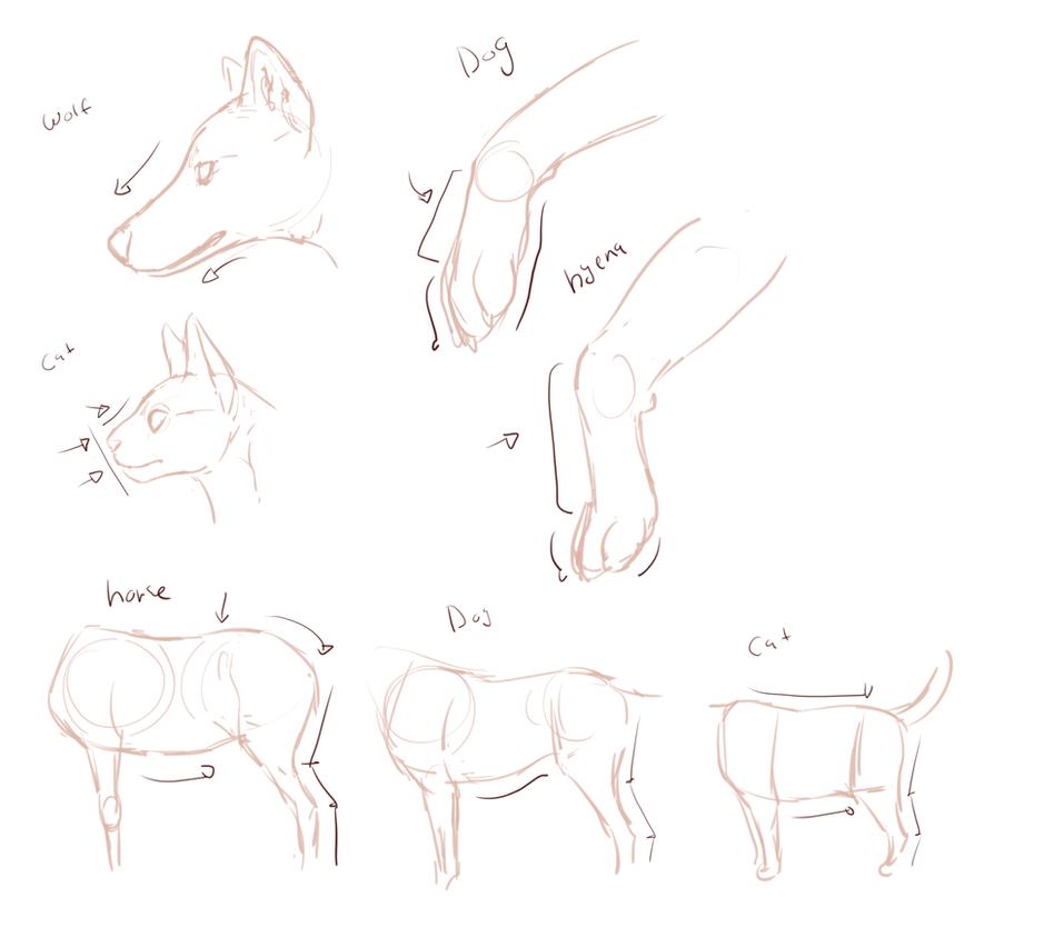 Quick comparative anatomy- wolf, cat, hyena, horse by nekonotaishou ...