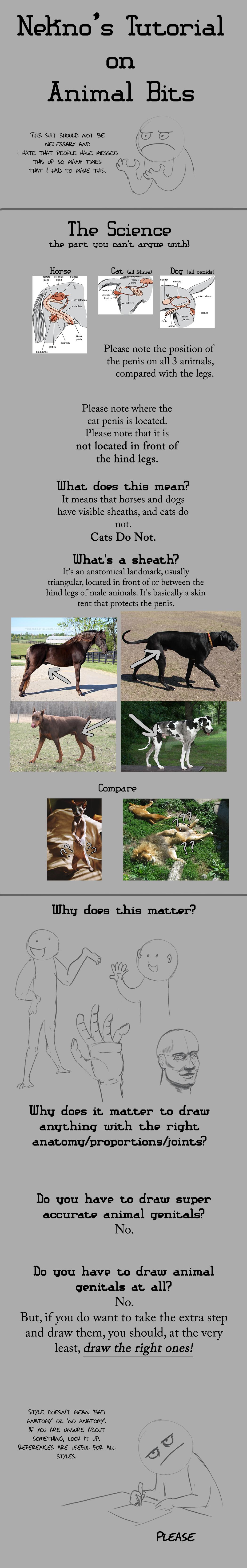 Tutorial: Animal Bits by nekonotaishou on DeviantArt