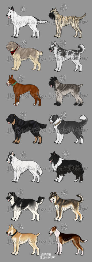 Dog point adoptables- CLOSED