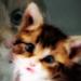 Free Gallery Folder Icon 75x75 by funkypunk2