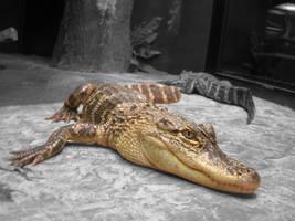 Alligator by Tailfeathrz