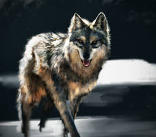 Wolf photo study by Ketunleipaa