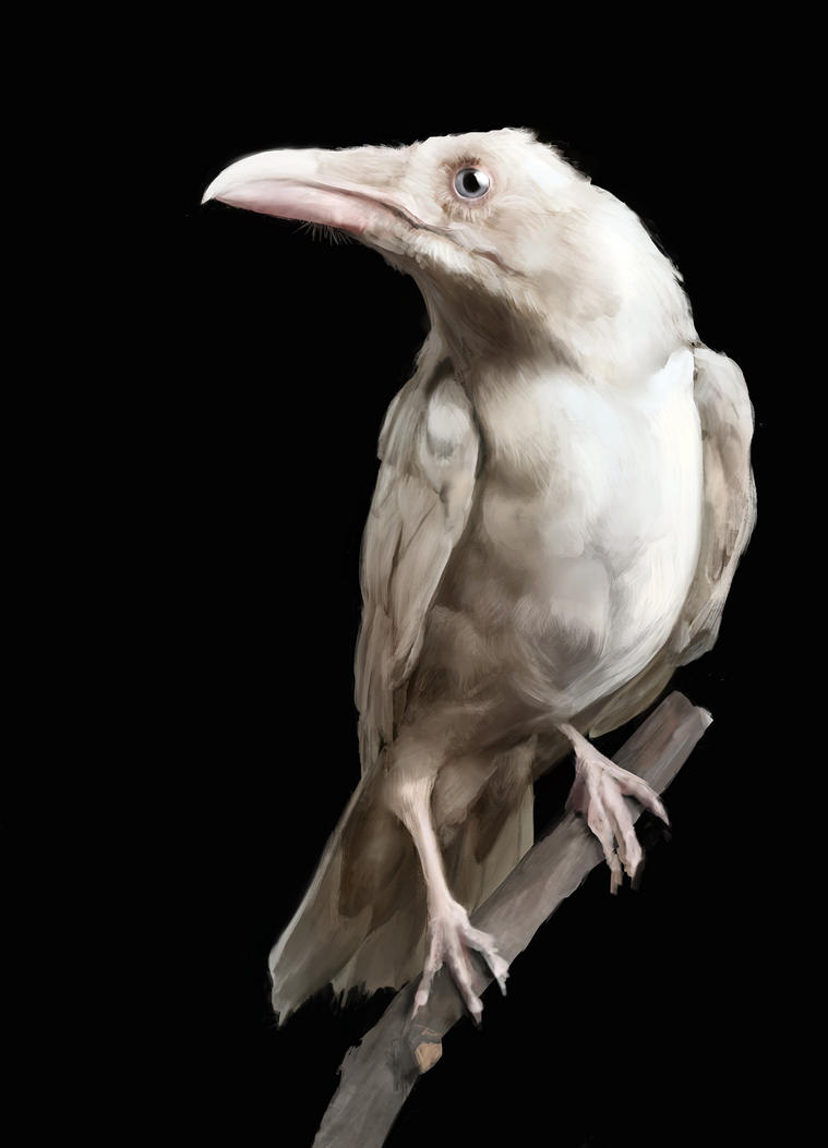 Albino raven by Ketunleipaa