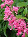 Little flowers by LuLebel