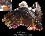 Vulture 02