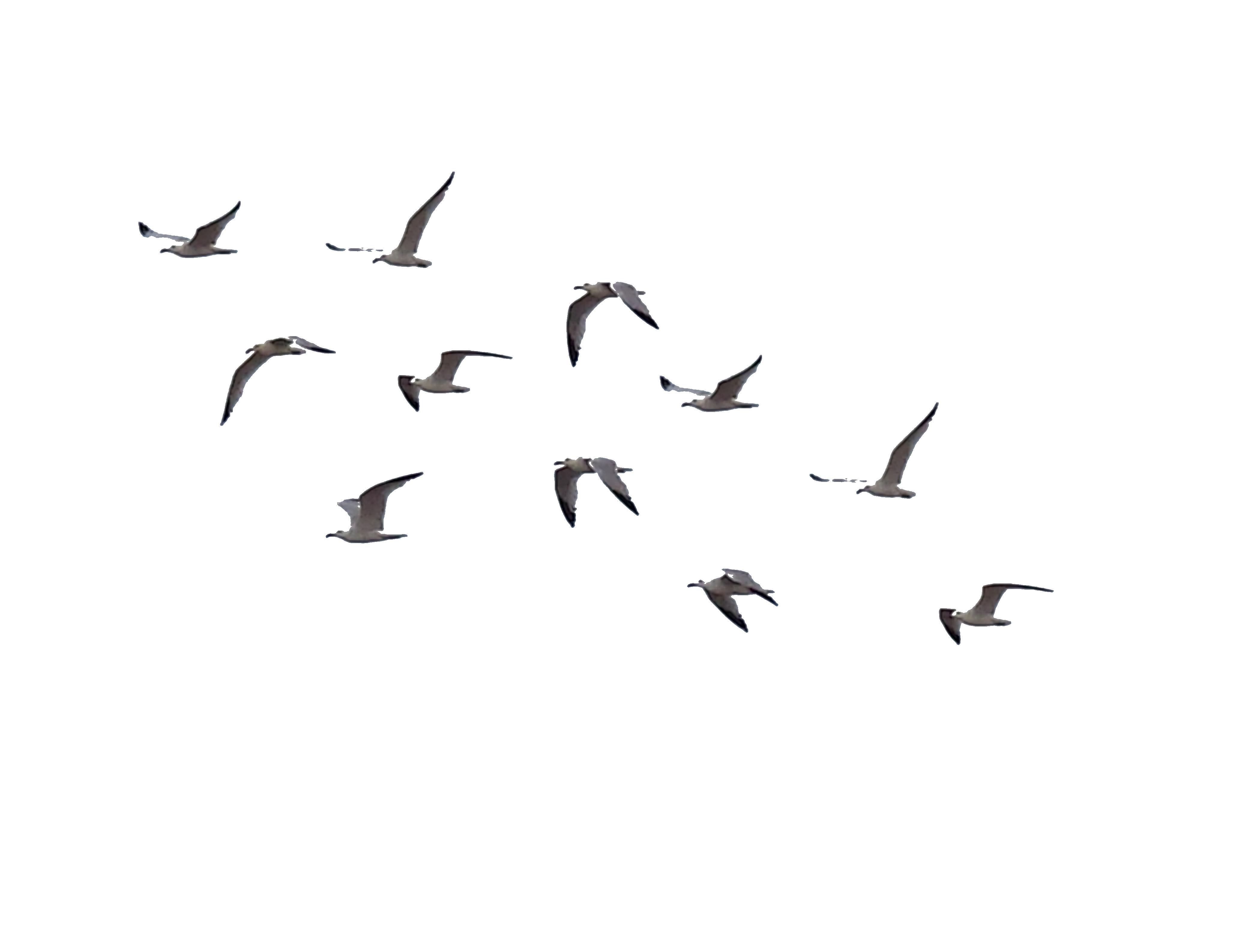 Birds Stock 01 by Brizzolatto55