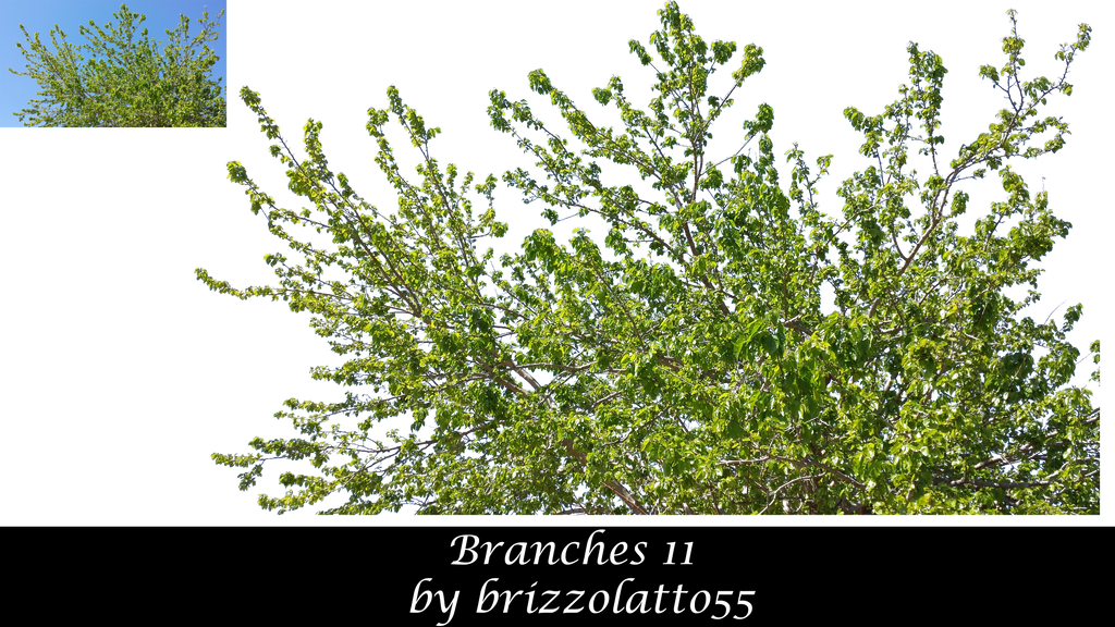 Branches 11