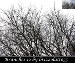 Branches 12