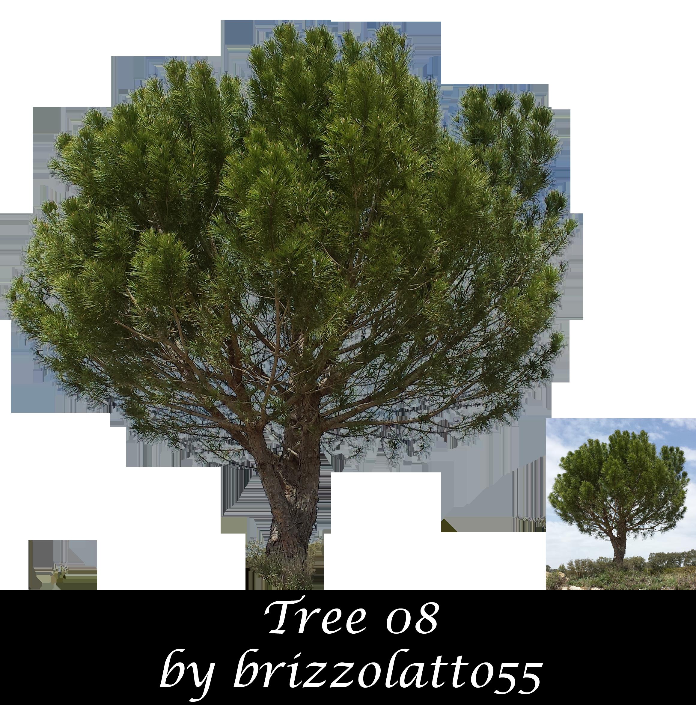 Tree 08 by Brizzolatto55