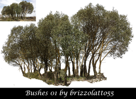 Bushes 01 by Brizzolatto55