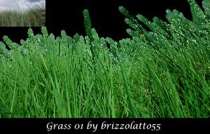 Grass 01 by Brizzolatto55