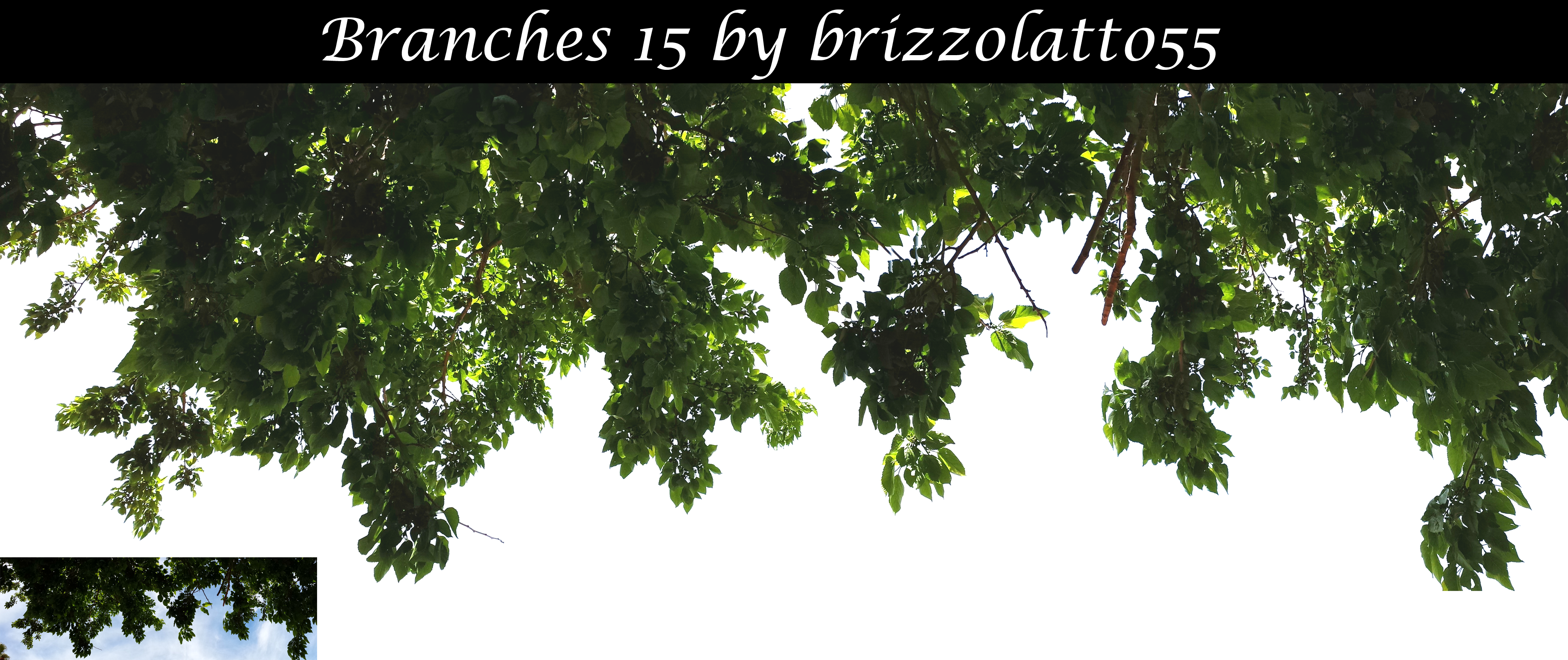 Branches 15 by Brizzolatto55