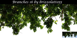Branches 16