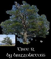 Tree 12 by Brizzolatto55