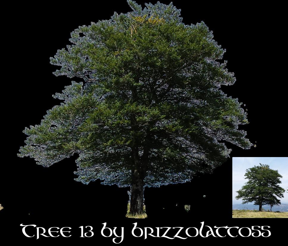 Tree 13 by Brizzolatto55