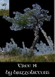 Tree 14 by Brizzolatto55
