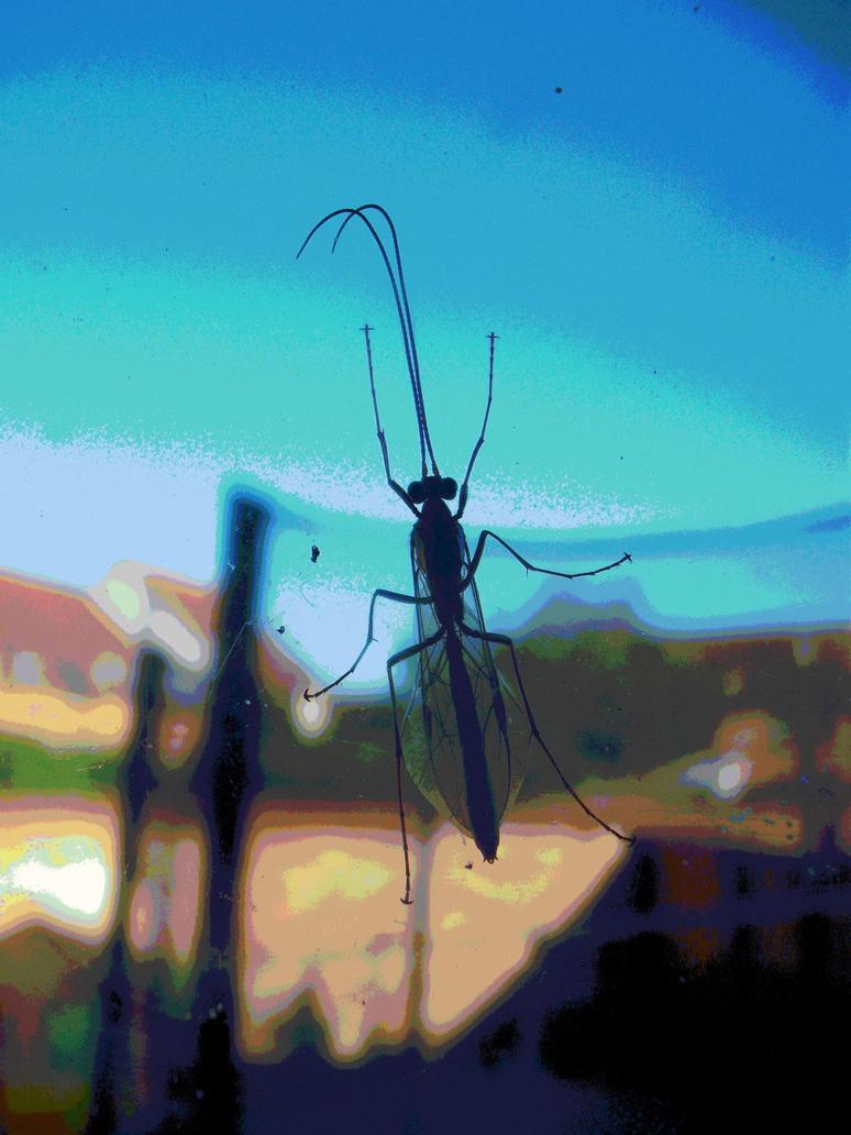 Bug-Eyed In Wonder by Lothrian