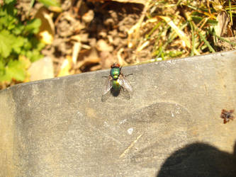 Fly Guy (1)