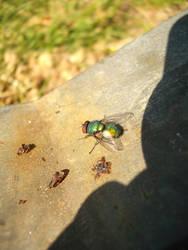 Fly Guy (3)