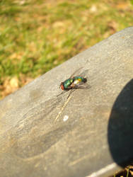 Fly Guy (4)