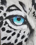 Snow Leopard's Eye -Old Drawing