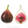Icon - Figs by fmr1
