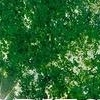 Icon - Green Canopy by fmr1