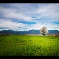 flower tree by iustyn