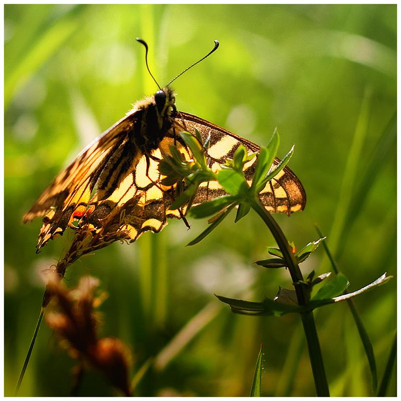under my wing by iustyn