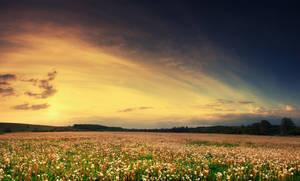 flower field III