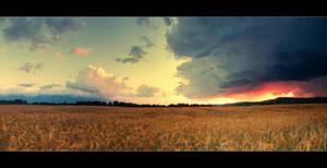 summer rain by iustyn