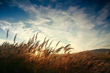 breath of wind by iustyn
