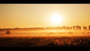 summer sun by iustyn