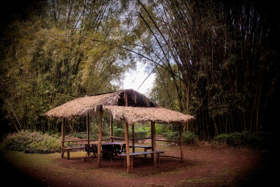 Bamboo Summer by AmethystUnderwood