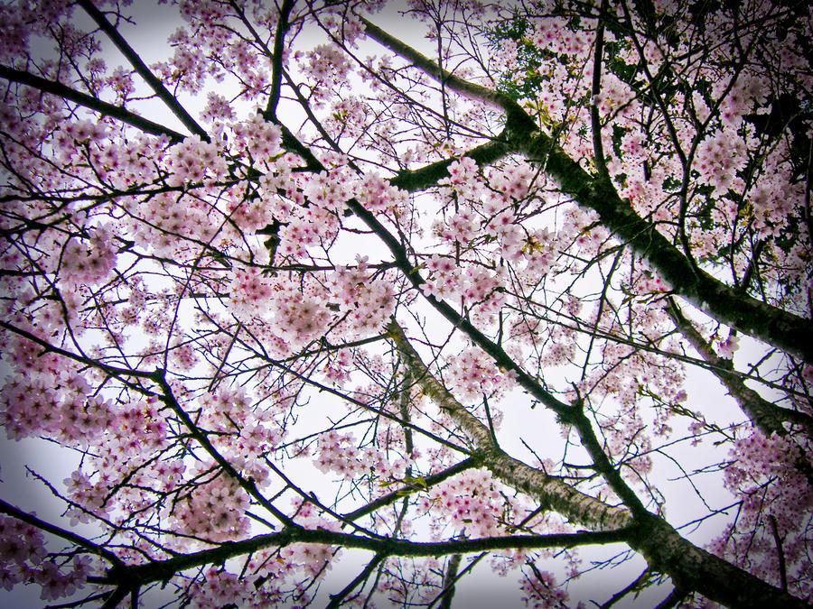 Carry Me Home Sweet CherryRose by AmethystUnderwood