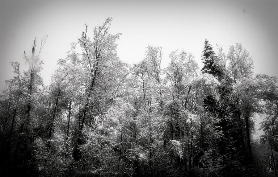 Frozen Spires by AmethystUnderwood