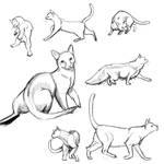 Cat Poses: study1