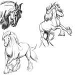 Horse Poses: Study1