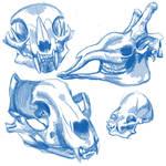 Skull study:1