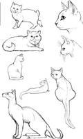 Cat Poses: Study 2